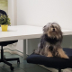 Cani In Ufficio Coworking